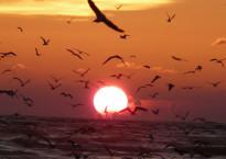 sunset-birds-over-sea